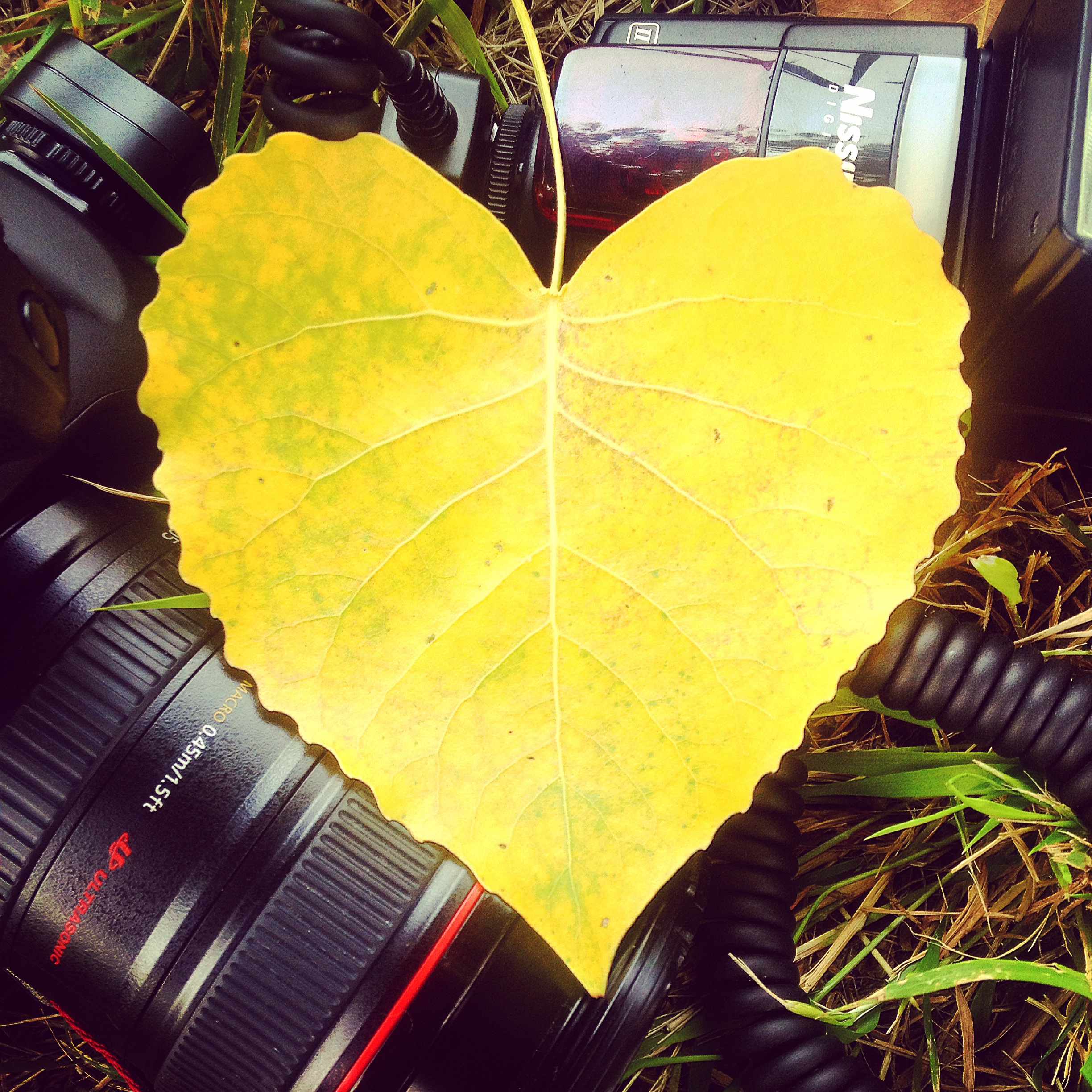 love-heart-yellow-photography
